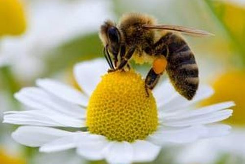 abejas-1-500.jpg