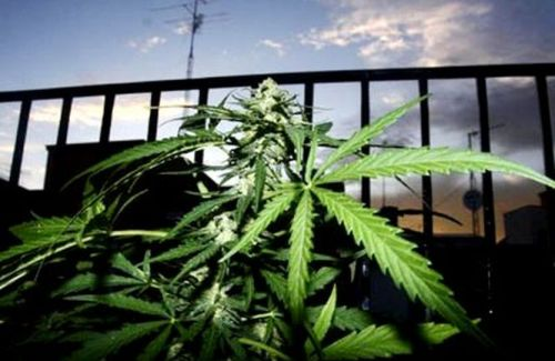 marihuana-art1.jpg