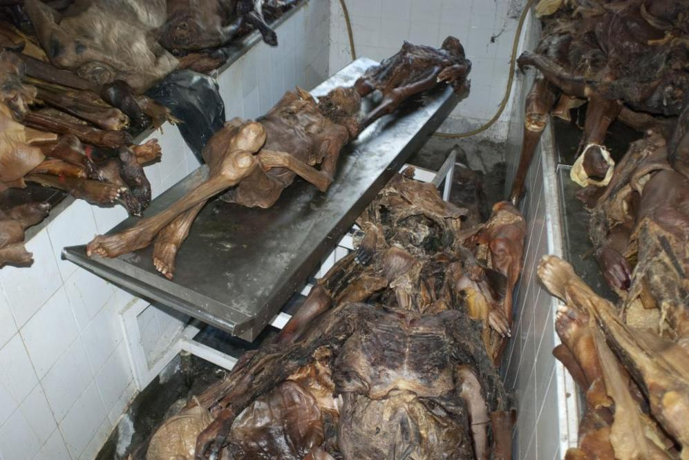 La Complutense cree que hubo delito en la gestión de cadáveres en ...