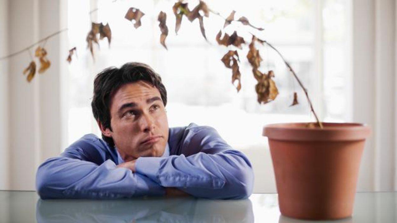 hiperlipidemia y disfunción eréctil
