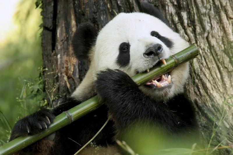 Hasta 10 especies, incluido el hombre, podrían extinguirse por el ...