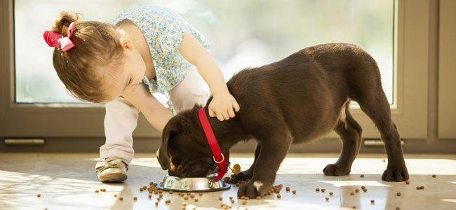 Son los mejores amigos pero como les ocurre a los humanos - Como acabar con las pulgas en casa ...