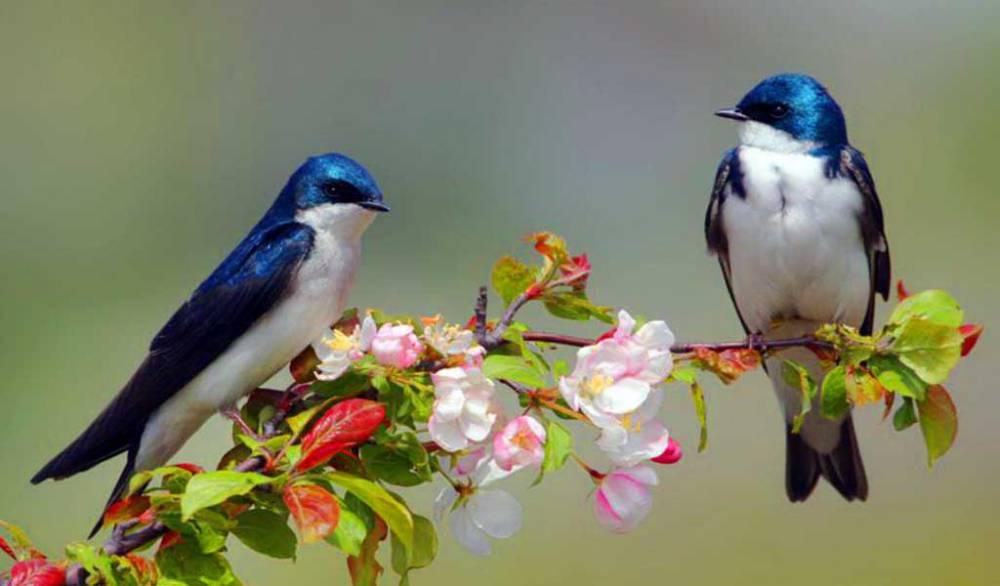 El mundo podría tener unas 18.000 especies de aves - Republica.com