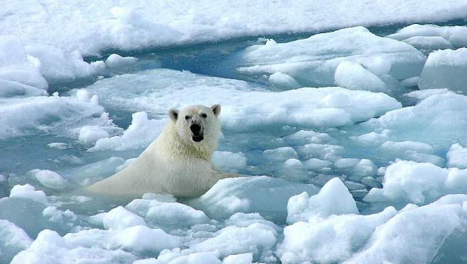 Image result for 11.000 cientificos emergencia climatica