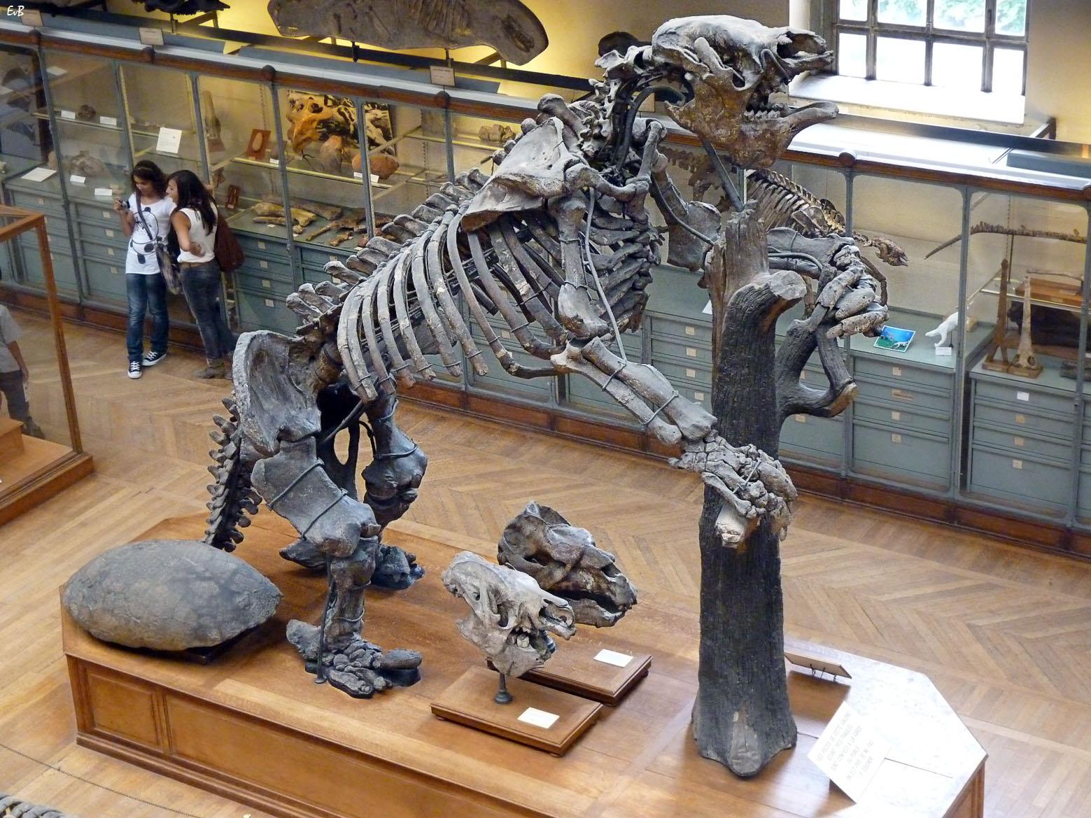 Los humanos cazaban a perezosos gigantes hace 11.000 años