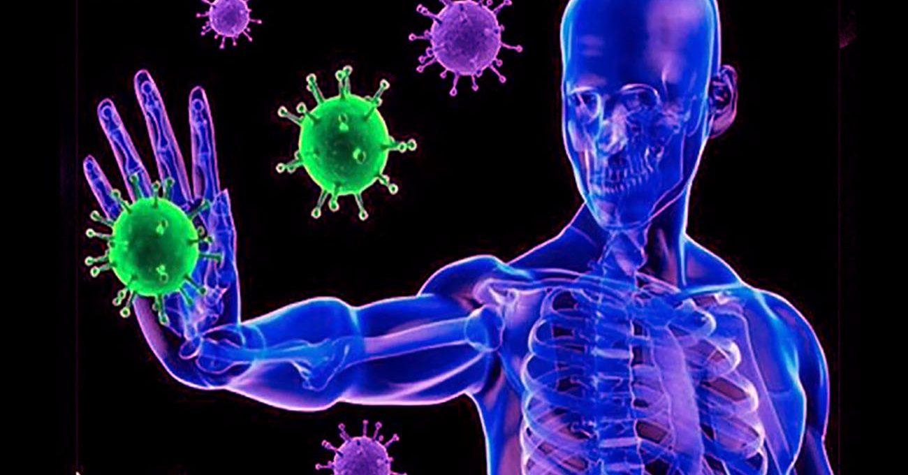 Decodifican por primera vez parte clave del sistema inmunológico ...