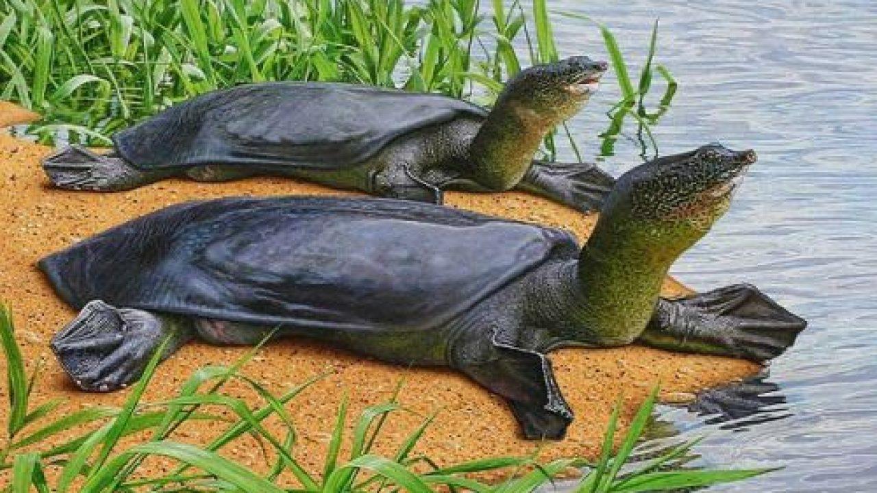 que es una tortuga tortuga de caparazón