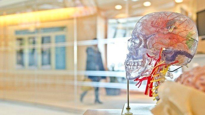 Desarrollan un método para medir la atrofia de la médula espinal - Republica.com