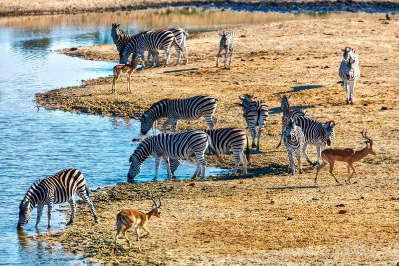 África extinción masiva